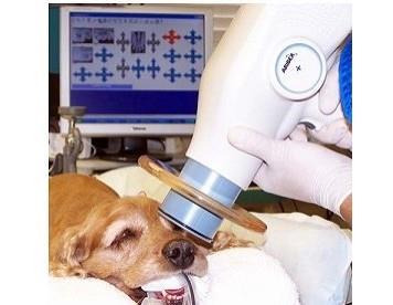 Nomad Veterinary Handheld Xray